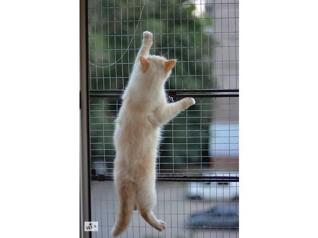 """продам Выгул на окно для кошек. """"Броневик"""" Днепр. бу в Днепре (Днепропетровск)"""