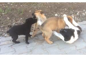 Игривые симпатичные щенки есть мальчики и девочки