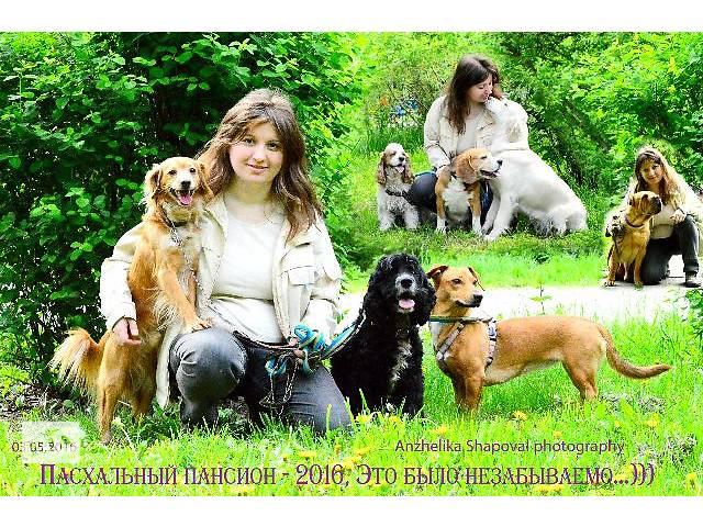 Зоогостиница, пансион для собак, передержка, отель для собак, гостиница для собак, для животных от 60 грн, Киев.- объявление о продаже  в Киеве