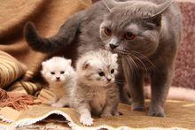 Другие породы котов