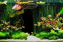 Рослини для акваріумів