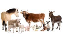 Сільськогосподарські тварини