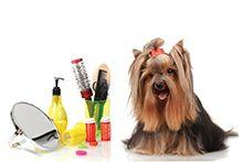 Инструменты и оборудование для груминга собак